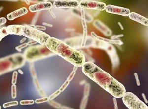 רעלן (טוקסין) – toxin