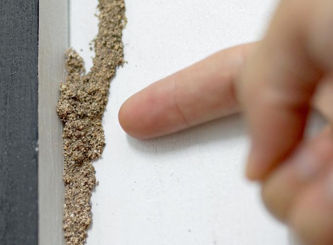טרמיטאים – Isoptera (termites)
