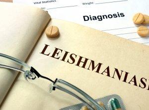 ליישמניאזיס של האיברים הפנימיים – visceral leishmaniasis