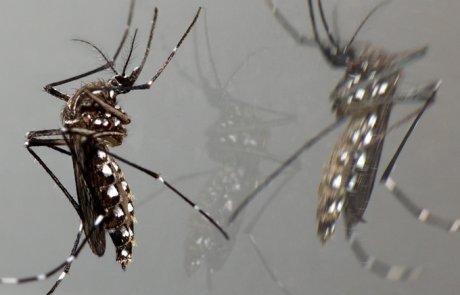 יתוש הטיגריס האסייני- Aedes albopictus