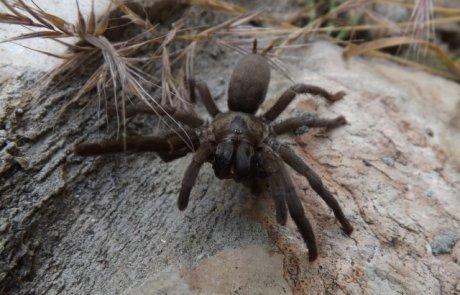 עכבישים – לא מה שחשבתם
