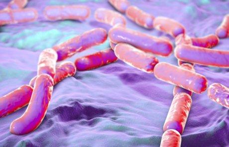 בצילוס – Bacillus