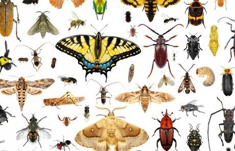 חרקים – Insecta
