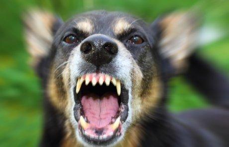 כלבת – rabies