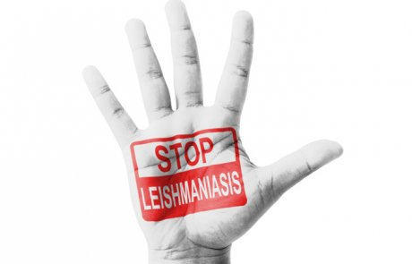 ליישמניה – Leishmania
