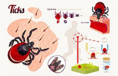 וֶקְטוֹר [מַעֲבִירָן, מעביר גורמי מחלות] – vector