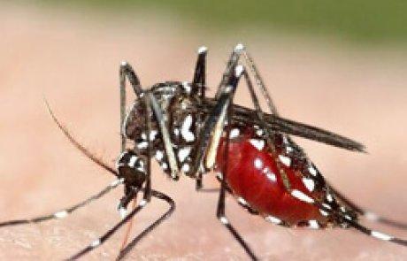 יתוש הטיגריס האסייני