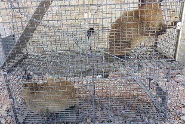 ארגון המדבירים: בעד ניהול תכניות הדברה ברשויות המקומיות, נגד ירי חסר רסן בשפני סלע