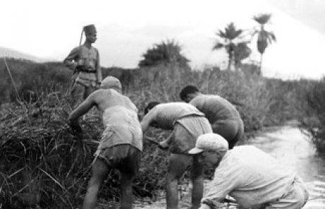 המלריה בארץ ישראל