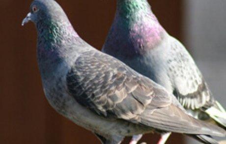 תורת הדוקרן נגד ציפורים