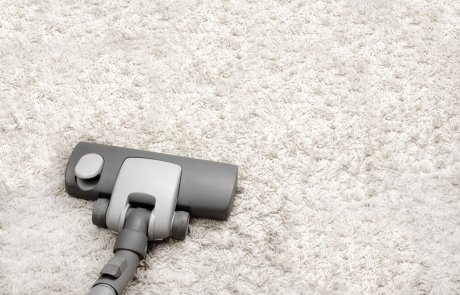 עושה לנו אלרגיה: קרדית אבק הבית