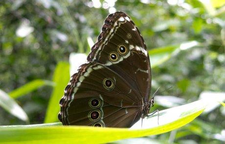 10 עובדות שלא ידעתם על חרקים ופרוקי רגליים אחרים