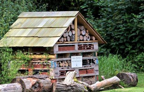 אבקנית יקרונית ונקושית, חיפושיות המזיקות לעץ יבש ומוצריו