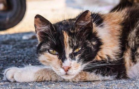 חתולי רחוב: נזקים, תועלות והמלצות חשובות