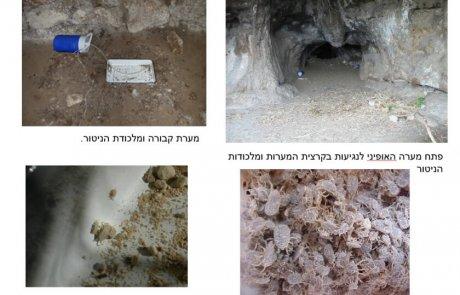קרצית המערות וקדחת המערות
