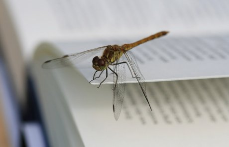 ספרי החובה לכל מדביר או חובב טבע וחרקים