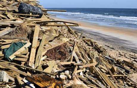 על הוריקן 'מייקל', אסונות טבע ומזיקים