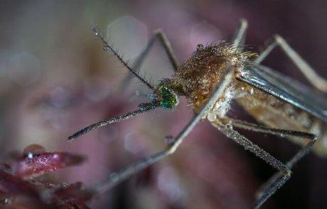 מיתוסים על יתושים שחשוב לנפץ – חלק ב'