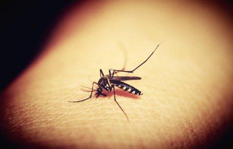 על יתושים, מחלות ומה שביניהם