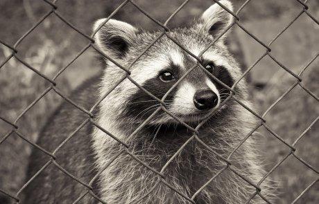 הרחקה הומנית של חיות בר לטובת כולם