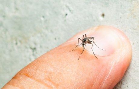 יתושי האדס (Aedes) – הכספי, הימי והטיגריס האסייני