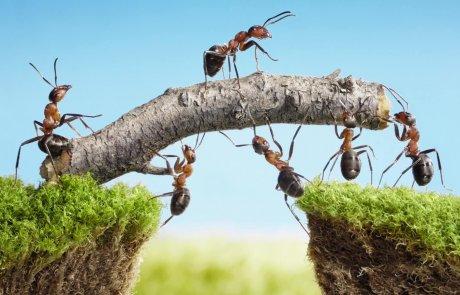 כך תרחיקו נמלים מהבית בשיטות טבעיות וידידותיות